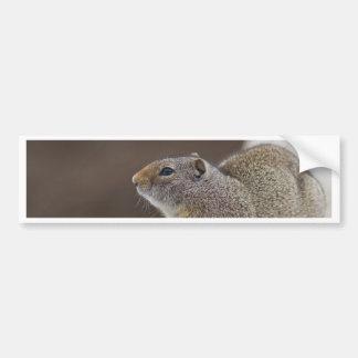 Uinta Groud Squirrel Bumper Sticker