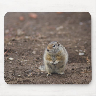 Uinta Groud Squirrel Mouse Pad