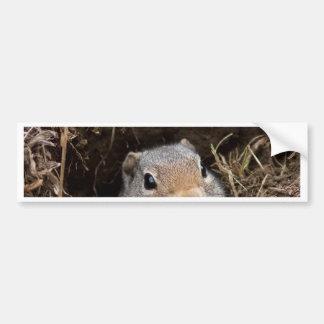 Uinta Ground Squirrel Bumper Sticker