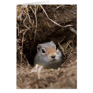Uinta Ground Squirrel Card