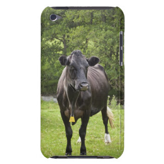 UK, England, Cumbria, The Lake District, Cow in Barely There iPod Cover