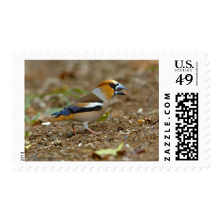 UK, England, Gloucestershire.  Hawfinch Stamps