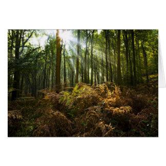 UK, England. Rays of sunlight streaming through Card