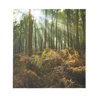 UK, England. Rays of sunlight streaming through Notepad