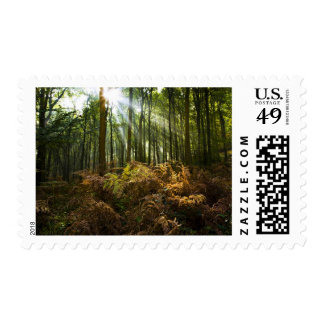 UK, England. Rays of sunlight streaming through Postage Stamps