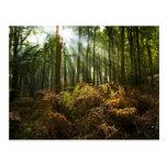 UK, England. Rays of sunlight streaming through Postcard