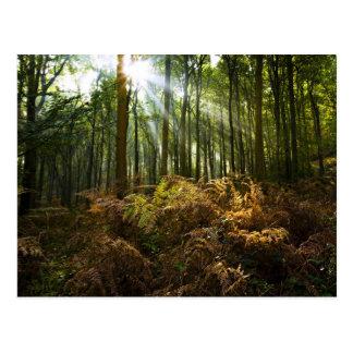 UK, England. Rays of sunlight streaming through Post Card