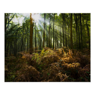 UK, England. Rays of sunlight streaming through Print