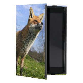 UK, England. Red Fox Vulpes vulpes) in Case For iPad Mini