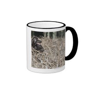 UK, England, Suffolk, Thetford Forest, Black 2 Ringer Mug