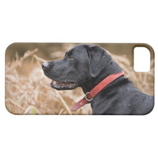 UK, England, Suffolk, Thetford Forest, Black 3 iPhone SE/5/5s Case