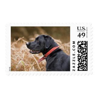 UK, England, Suffolk, Thetford Forest, Black 3 Stamp