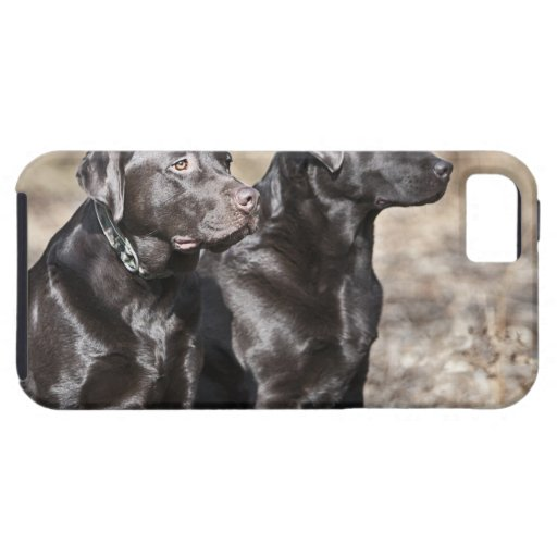UK, England, Suffolk, Thetford Forest, Black iPhone 5 Cover