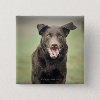 UK, England, Suffolk, Thetford Forest, Black dog Button