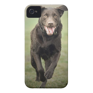 UK, England, Suffolk, Thetford Forest, Black dog Case-Mate iPhone 4 Cases