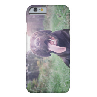 UK, England, Suffolk, Thetford Forest, Dog Barely There iPhone 6 Case