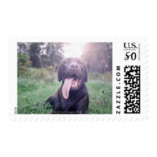 UK, England, Suffolk, Thetford Forest, Dog Postage