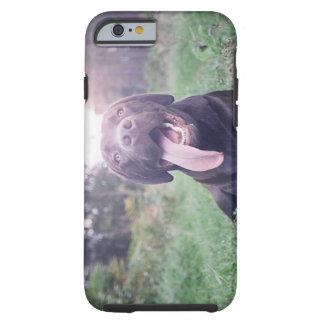 UK, England, Suffolk, Thetford Forest, Dog Tough iPhone 6 Case