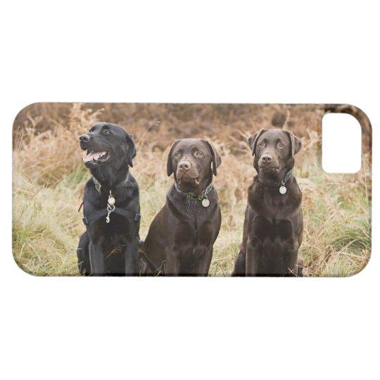 UK, England, Suffolk, Thetford Forest, Portrait iPhone SE/5/5s Case