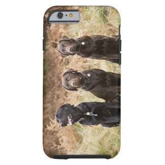 UK, England, Suffolk, Thetford Forest, Portrait Tough iPhone 6 Case