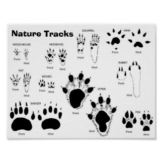 UK/Europe Animal Tracks Poster