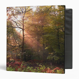 UK. Forest of Dean. Sunbeam penetrating a Binder
