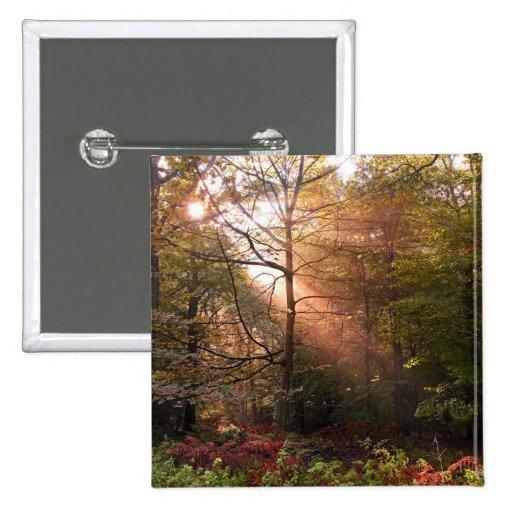 UK. Forest of Dean. Sunbeam penetrating a Pinback Buttons