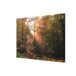 UK. Forest of Dean. Sunbeam penetrating a Stretched Canvas Prints