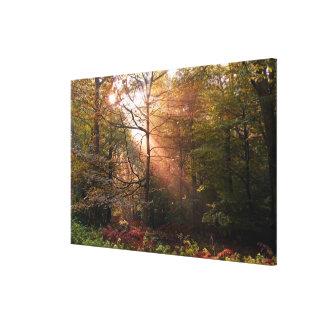 UK. Forest of Dean. Sunbeam penetrating a Canvas Print