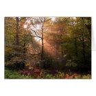 UK. Forest of Dean. Sunbeam penetrating a Card