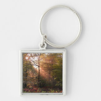 UK. Forest of Dean. Sunbeam penetrating a Key Chain