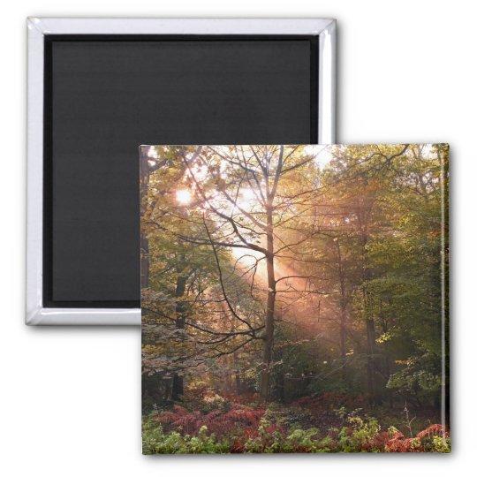 UK. Forest of Dean. Sunbeam penetrating a Magnet