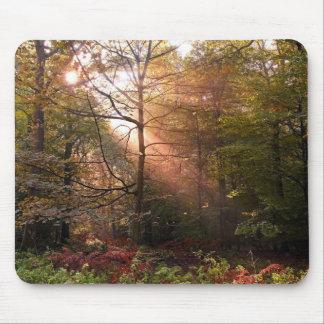 UK. Forest of Dean. Sunbeam penetrating a Mousepads