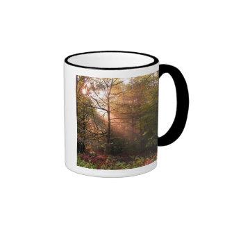 UK. Forest of Dean. Sunbeam penetrating a Mug