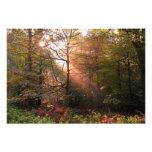 UK. Forest of Dean. Sunbeam penetrating a Art Photo