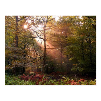 UK. Forest of Dean. Sunbeam penetrating a Postcards