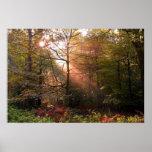 UK. Forest of Dean. Sunbeam penetrating a Print