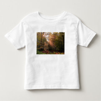 UK. Forest of Dean. Sunbeam penetrating a Toddler T-shirt
