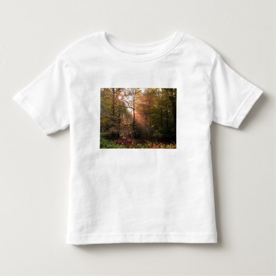UK. Forest of Dean. Sunbeam penetrating a Toddler T-shirt