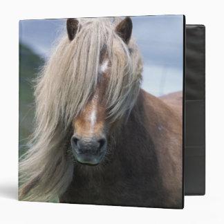 UK, Scotland, Shetland Islands, Shetland pony 3 Ring Binder