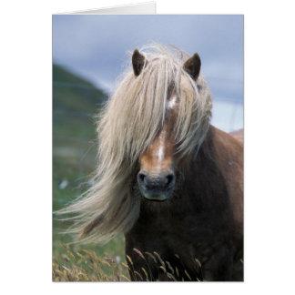 UK Scotland Shetland Islands Shetland pony Greeting Card