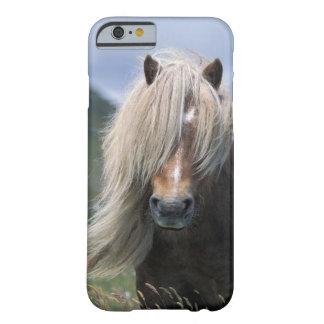 UK Scotland Shetland Islands Shetland pony iPhone 6 Case