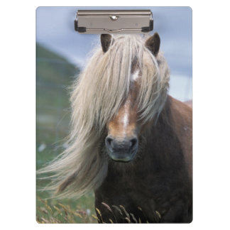 UK Scotland Shetland Islands Shetland pony Clipboard