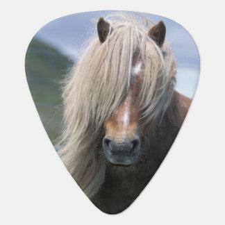 UK Scotland Shetland Islands Shetland pony Guitar Pick