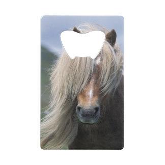 UK, Scotland, Shetland Islands, Shetland pony Credit Card Bottle Opener