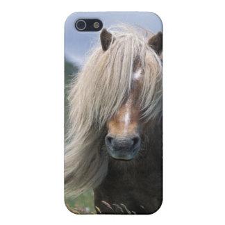 UK Scotland Shetland Islands Shetland pony Case For iPhone 5