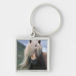 UK, Scotland, Shetland Islands, Shetland pony Keychain