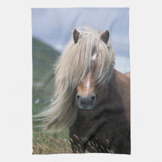 UK, Scotland, Shetland Islands, Shetland pony Hand Towels