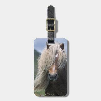 UK Scotland Shetland Islands Shetland pony Tags For Bags