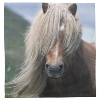 UK, Scotland, Shetland Islands, Shetland pony Napkins